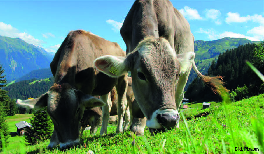 Click to enlarge image Foto.jpg